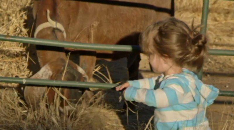 Little Life on the Prairie - Juniper Webnar and goat